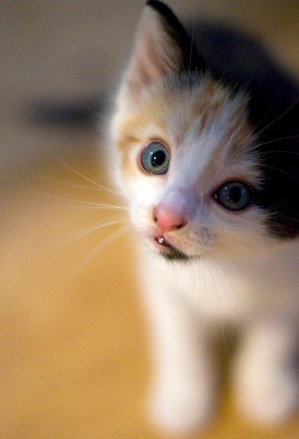 Madeline (and Siblings) [5] kitten