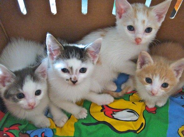Smoggy's Friends: Muffin, Beans, Billy & Heidi  kitten