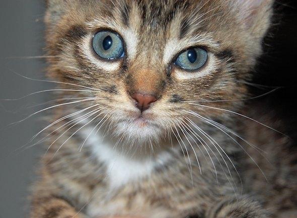 Jem [4]  kitten
