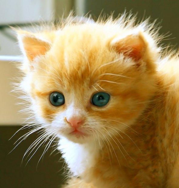 Kitten in Lithuania [4]  kitten