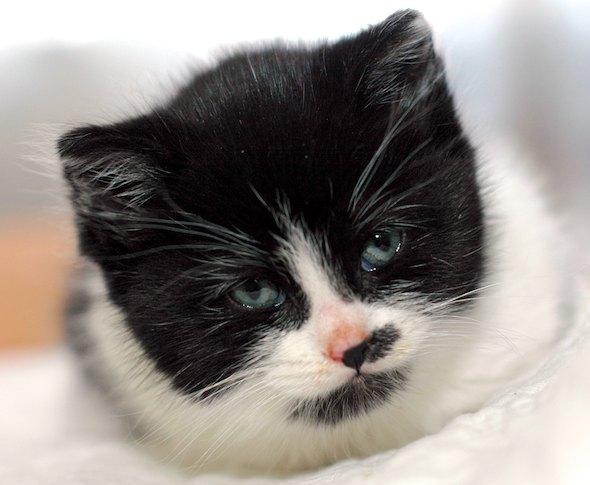 Apple [4]  kitten