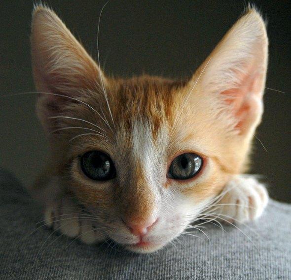 Bailee [5] kitten