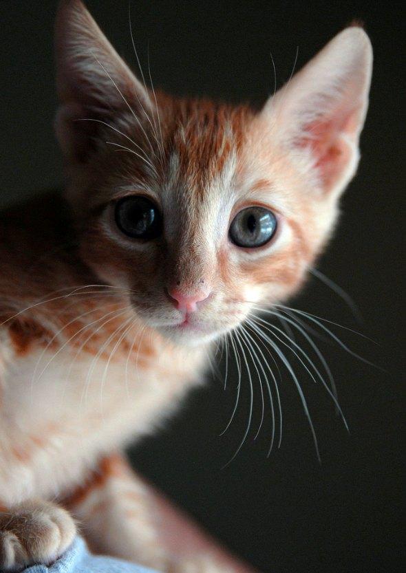 Mackenzie [5] kitten
