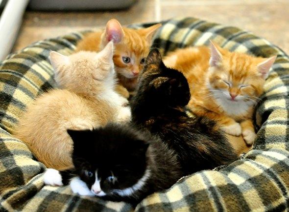 Nine Foster Kittens [5] kitten