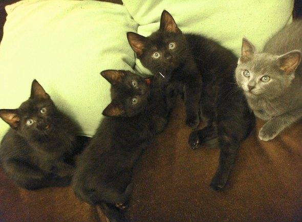 Smoggy's Friends: Pom Pom, Louie, Poppy & Pepper  kitten