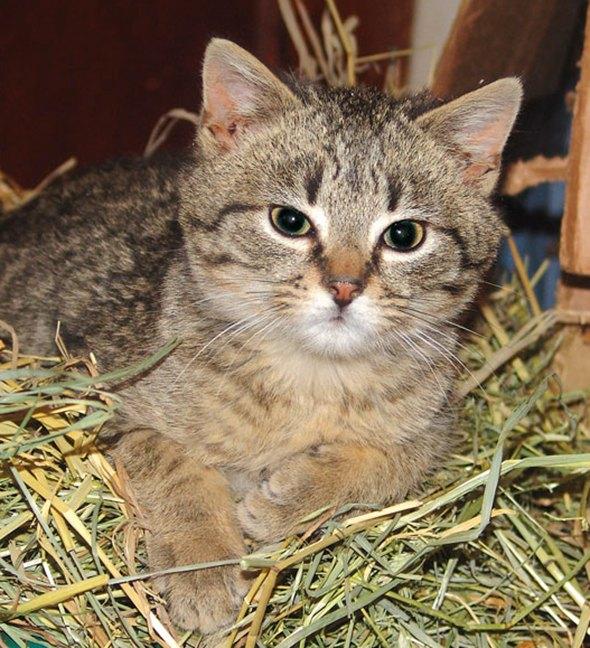 BG [3]  kitten