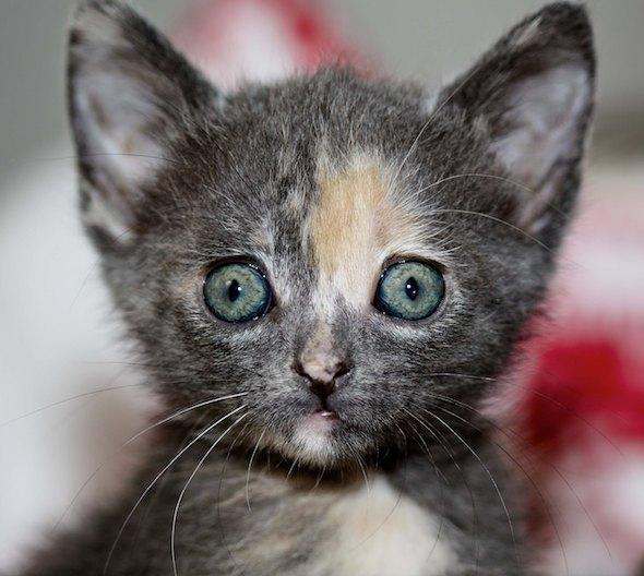 Zoey [4] kitten