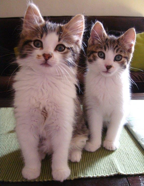Smoggy's Friends: Freya, Pendleton & Sinbad  kitten