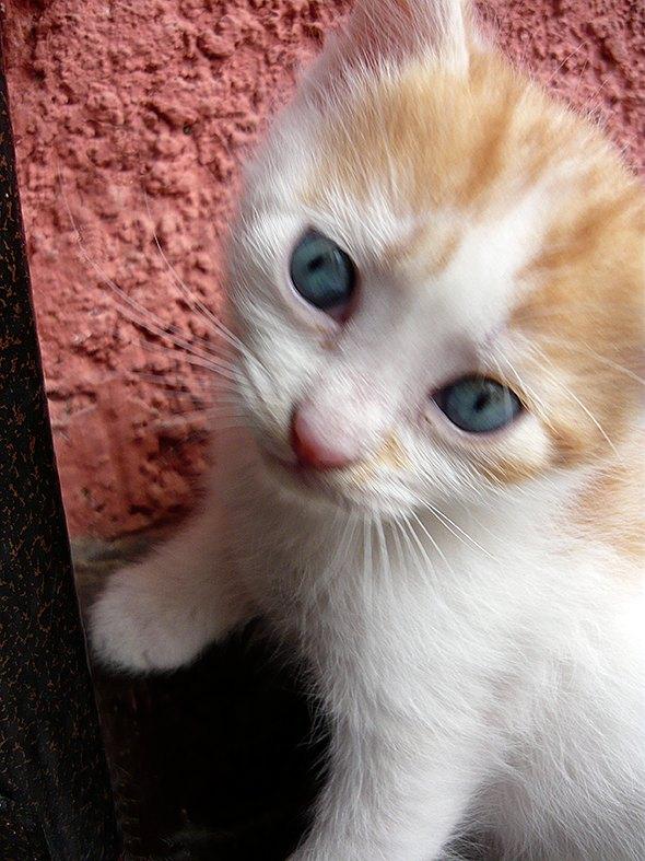 Otis [4] kitten