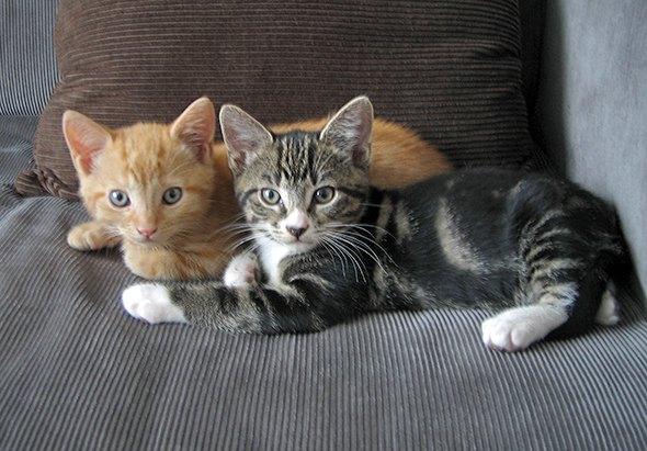 Naboo and Bollo [5] kitten