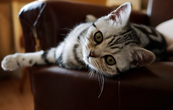 Mimi [5]  kitten