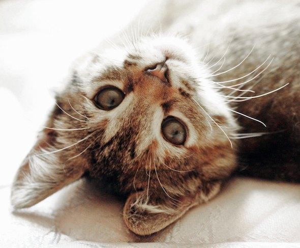 Timmeri [5]  kitten