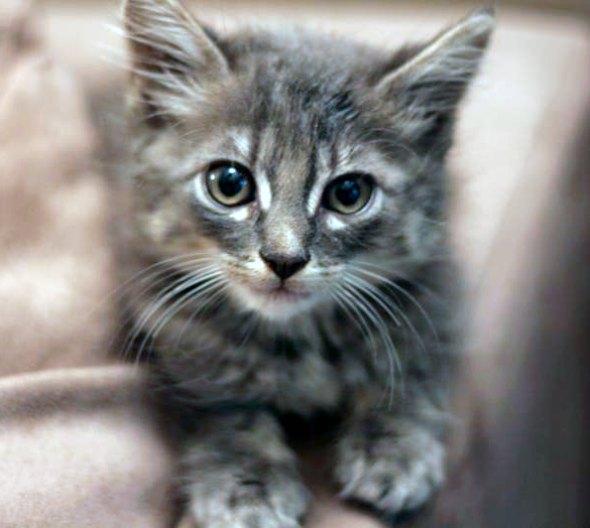Silas [4] kitten