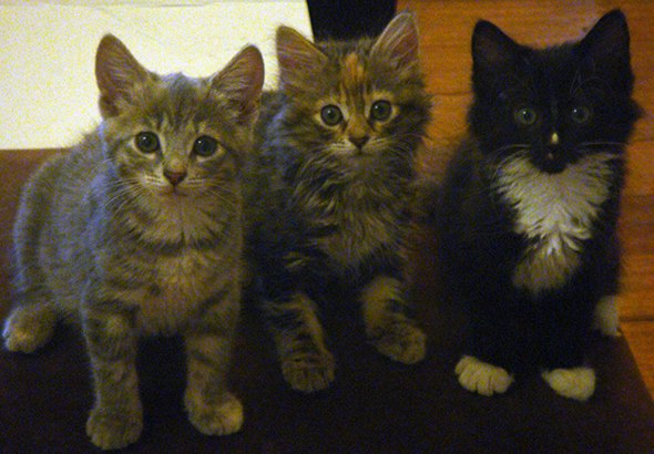 Smoggy's Friends: Summer, Button & Pandora [5]  kitten