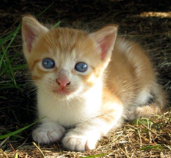 Bobby [4] kitten