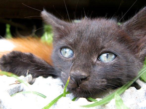 Bonny [4] kitten