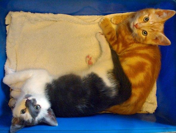 Smoggy's Friends: Christin & Algernon  kitten