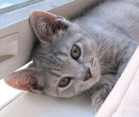 Ernie  kitten