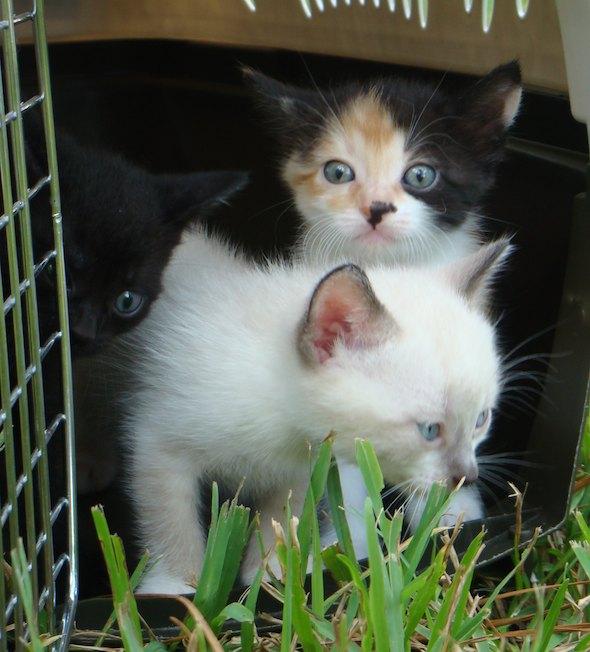 Ladybird's Kittens  kitten