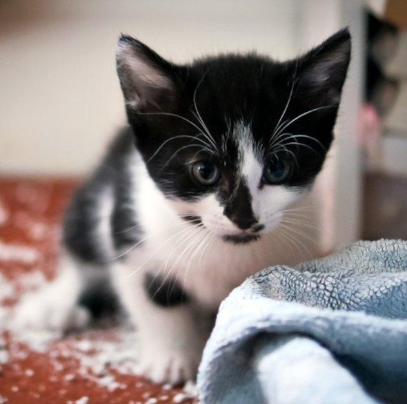 Hex's Kittens [5]  kitten