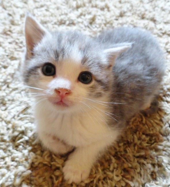 Ellie [4]  kitten