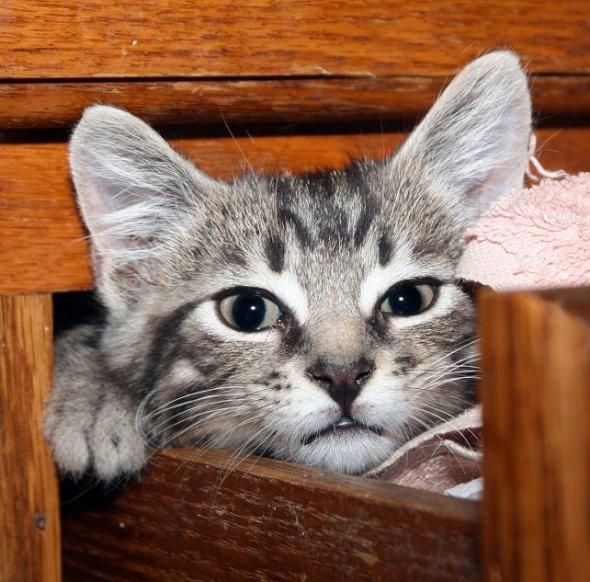 Sterling [4] kitten