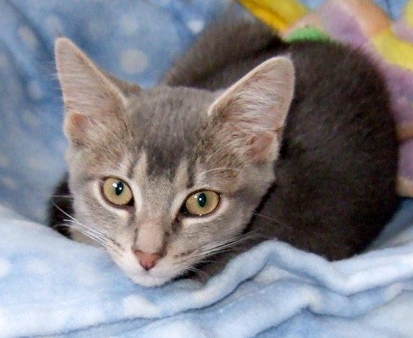 Jasper [3] kitten
