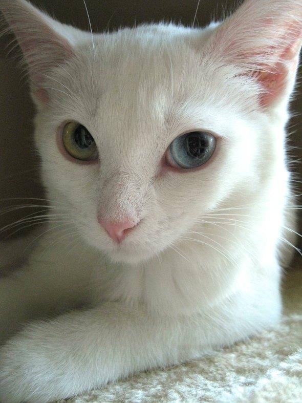 Ermimosept aka Mimo [5]  kitten