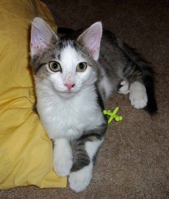 Charles [4] kitten