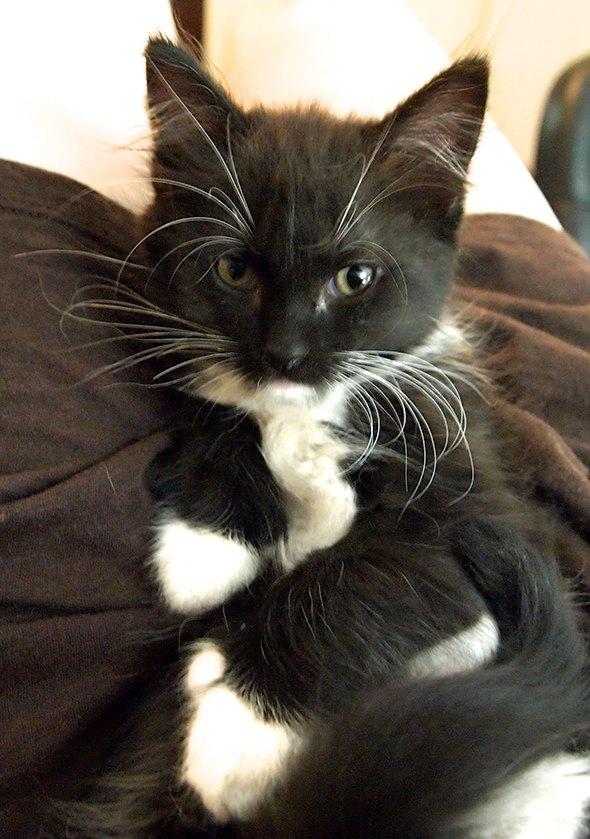 Sophie [4]  kitten