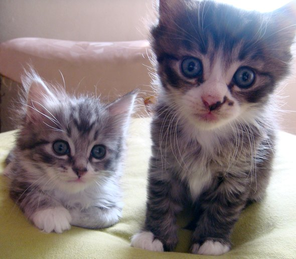 Smoggy's Friends: Tiggles & Rofl  kitten