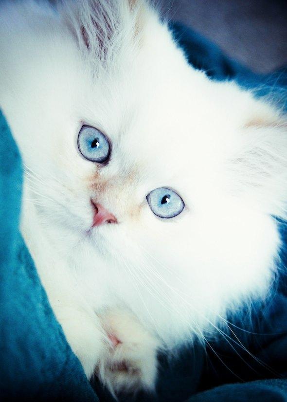 Dave  kitten