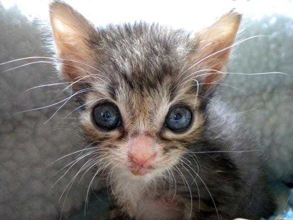 Three Little Orphans Part 3: Feivel [redux]  kitten