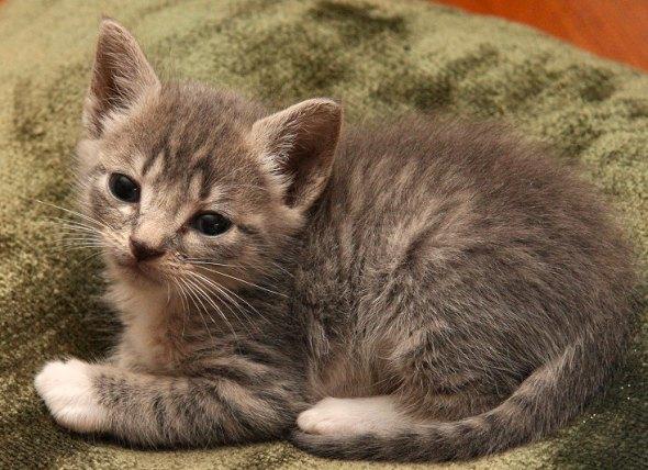 Remy Etienne LeBeau [4] kitten