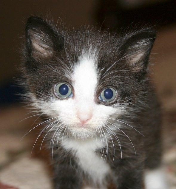Mason [4] kitten