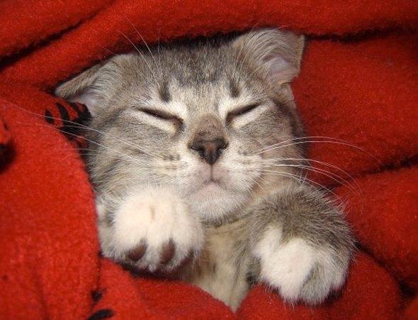 Dinah  kitten