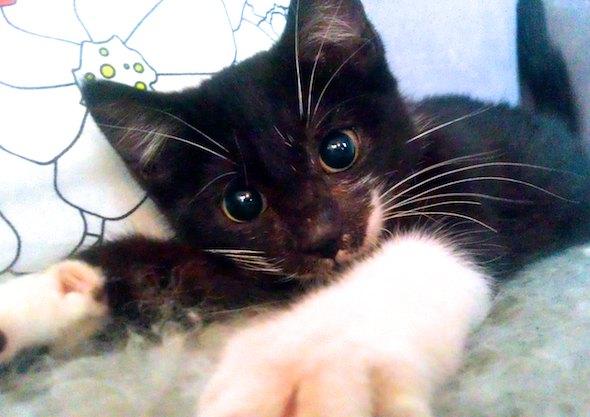 Lionel [3] kitten