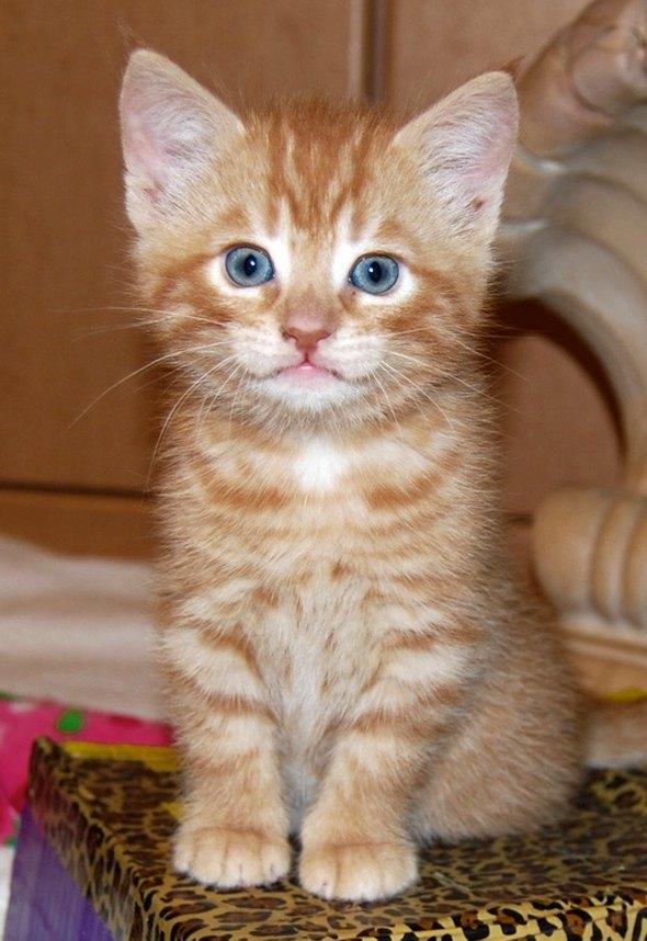 Henry [4] kitten