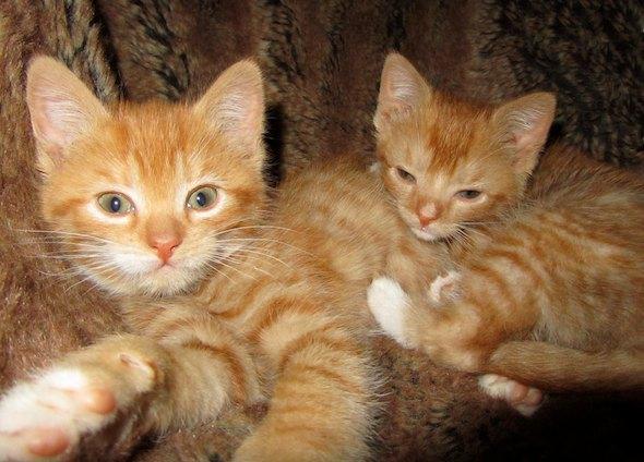 Sunny and Dusty [5]  kitten