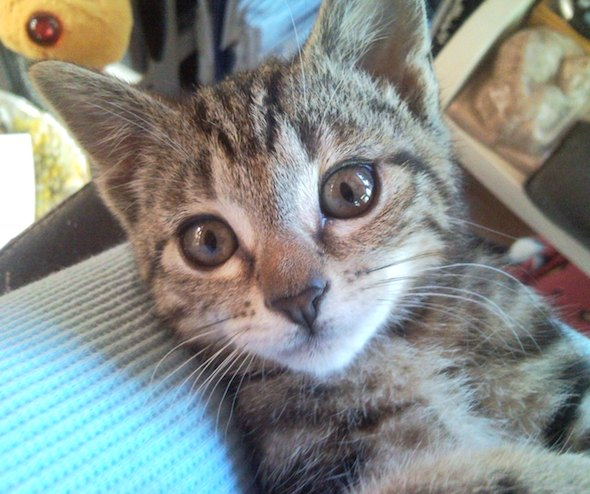 Winky [5]  kitten