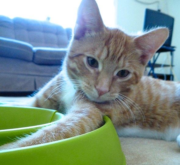 Rosencrantz [3] kitten