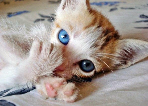 Krystal [5] kitten