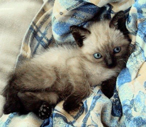 Ian [5] kitten
