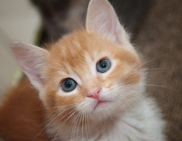 Patrick [4] kitten