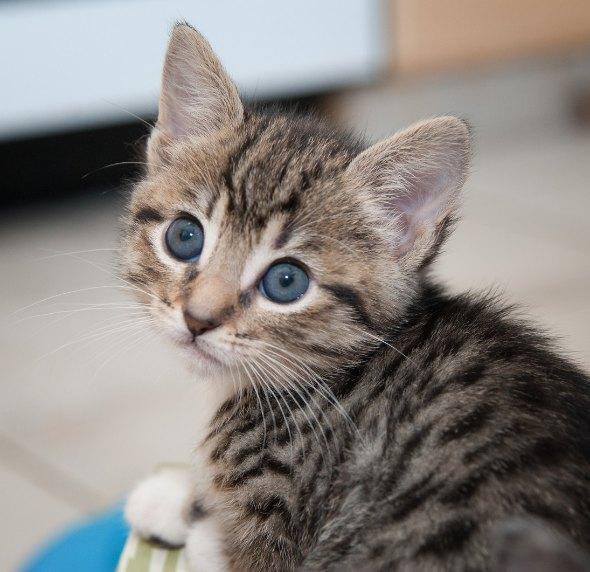 Emily [4] kitten