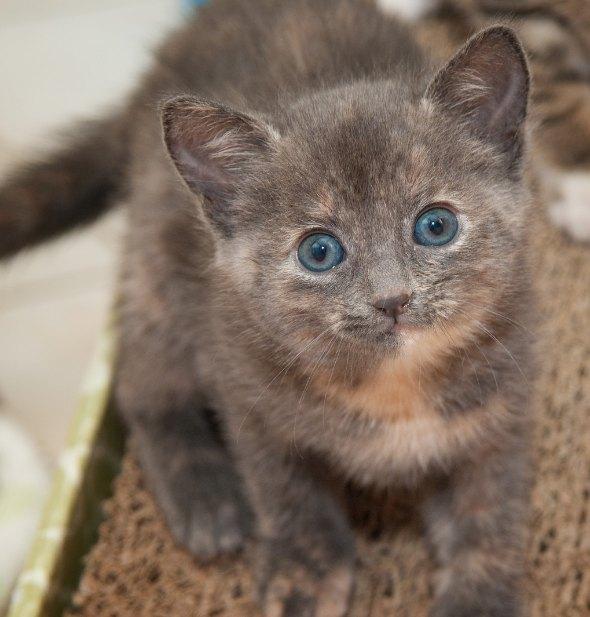 Ashley [4] kitten