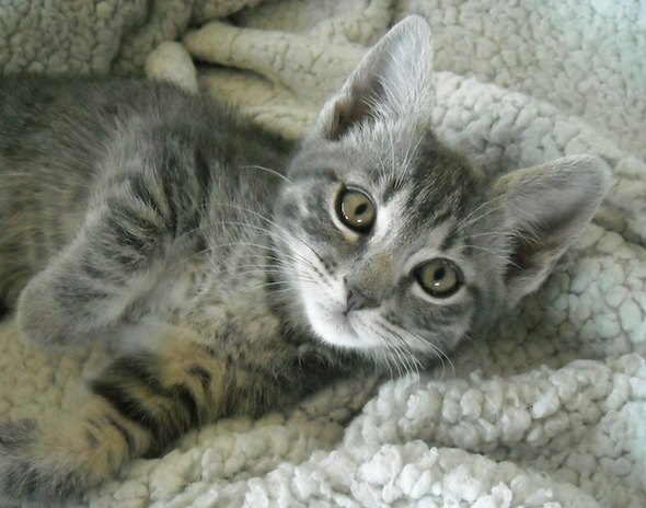 Zoe [4] kitten
