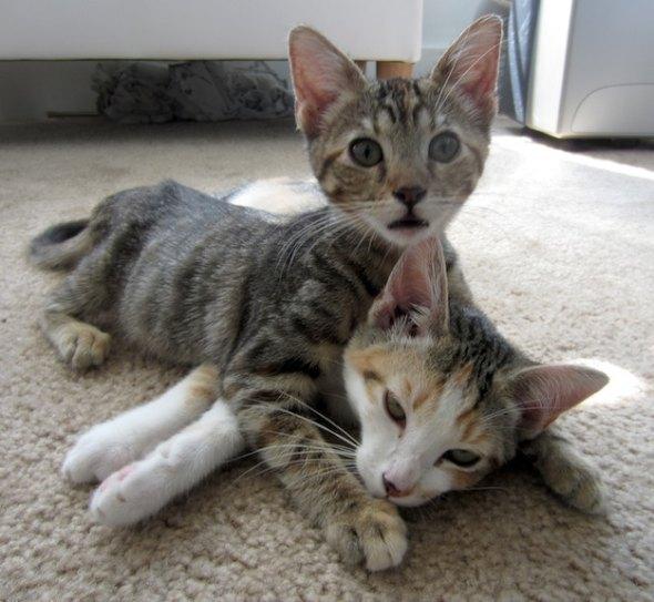 Lisa Jr. and Mary Mary [4] kitten