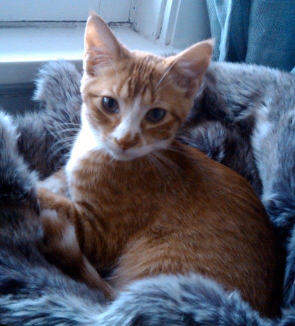 Charlie [4]  kitten