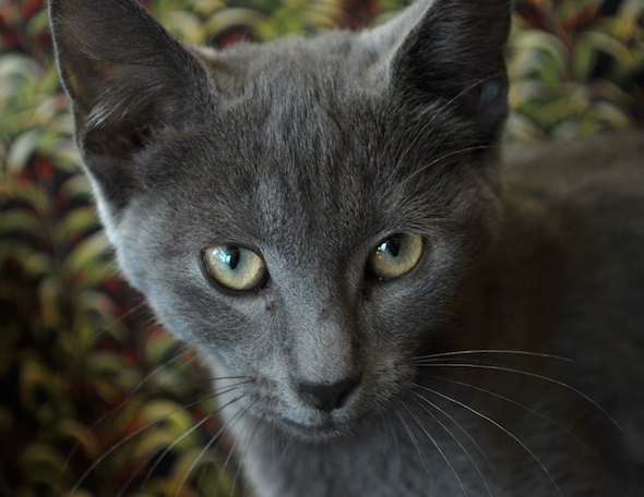 Max [4]  kitten